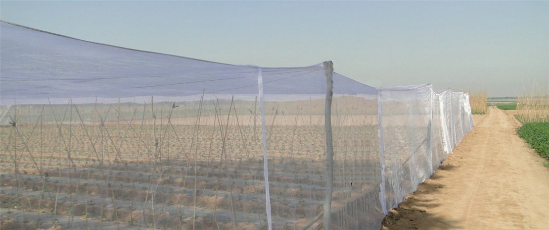 plastic netting (2)