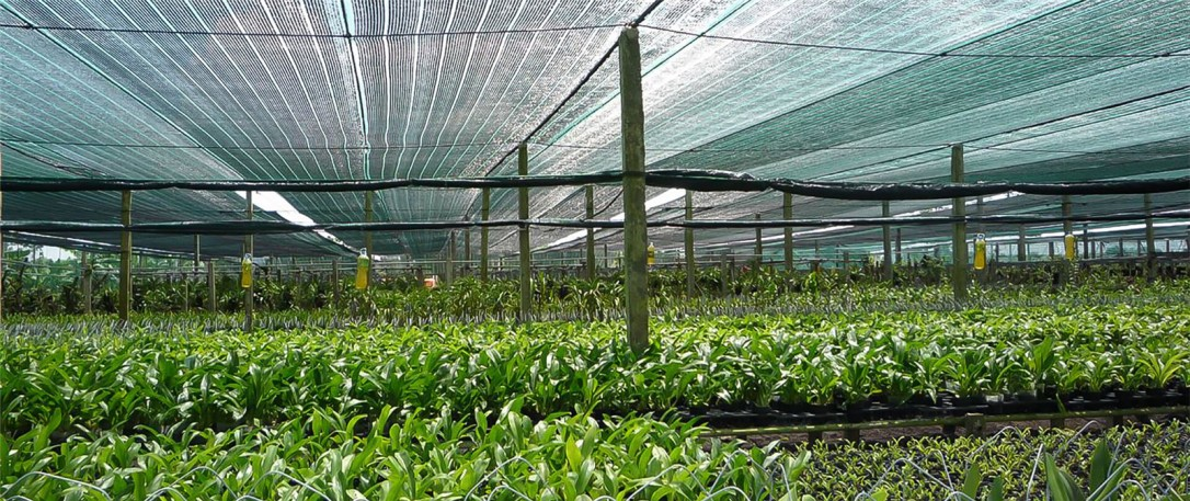plastic netting (4)